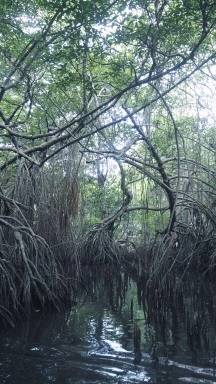Crazy Mangroves
