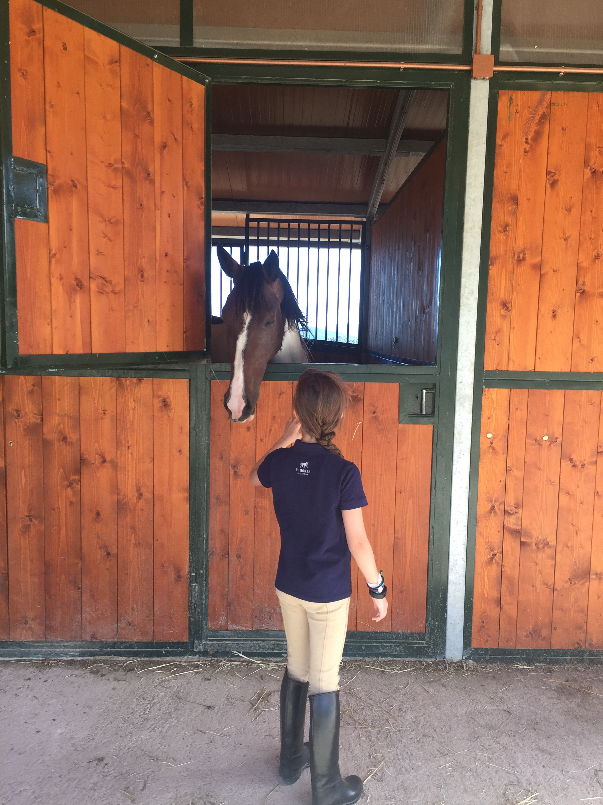 Saying hello to the horses in their stables
